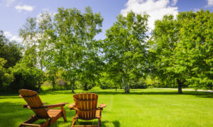 Growing and Mowing: Caring for Lawns Under Forest Trees
