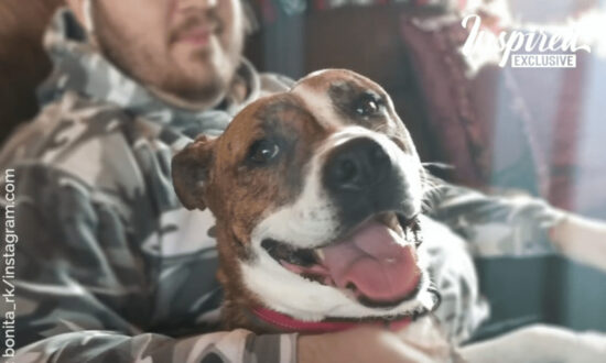 After 500 Days in Animal Shelter