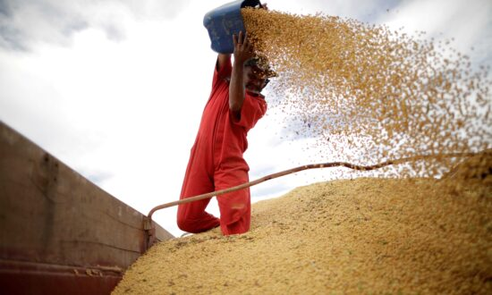 US Farmers Celebrate Soy Price Surge as Brazil Misses Out