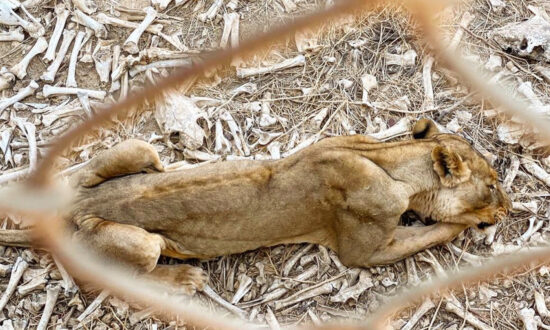 NGO Shares Shocking Images of Animals Left to Die in West African Zoo Amid Relief Effort