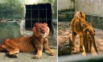 Shocked Visitor Reports Emaciated Lion and Starving Animals at Horrific Nigerian Zoo