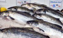 Fire in Tasmanian Fish Farm Sets 52,000 Salmon Free