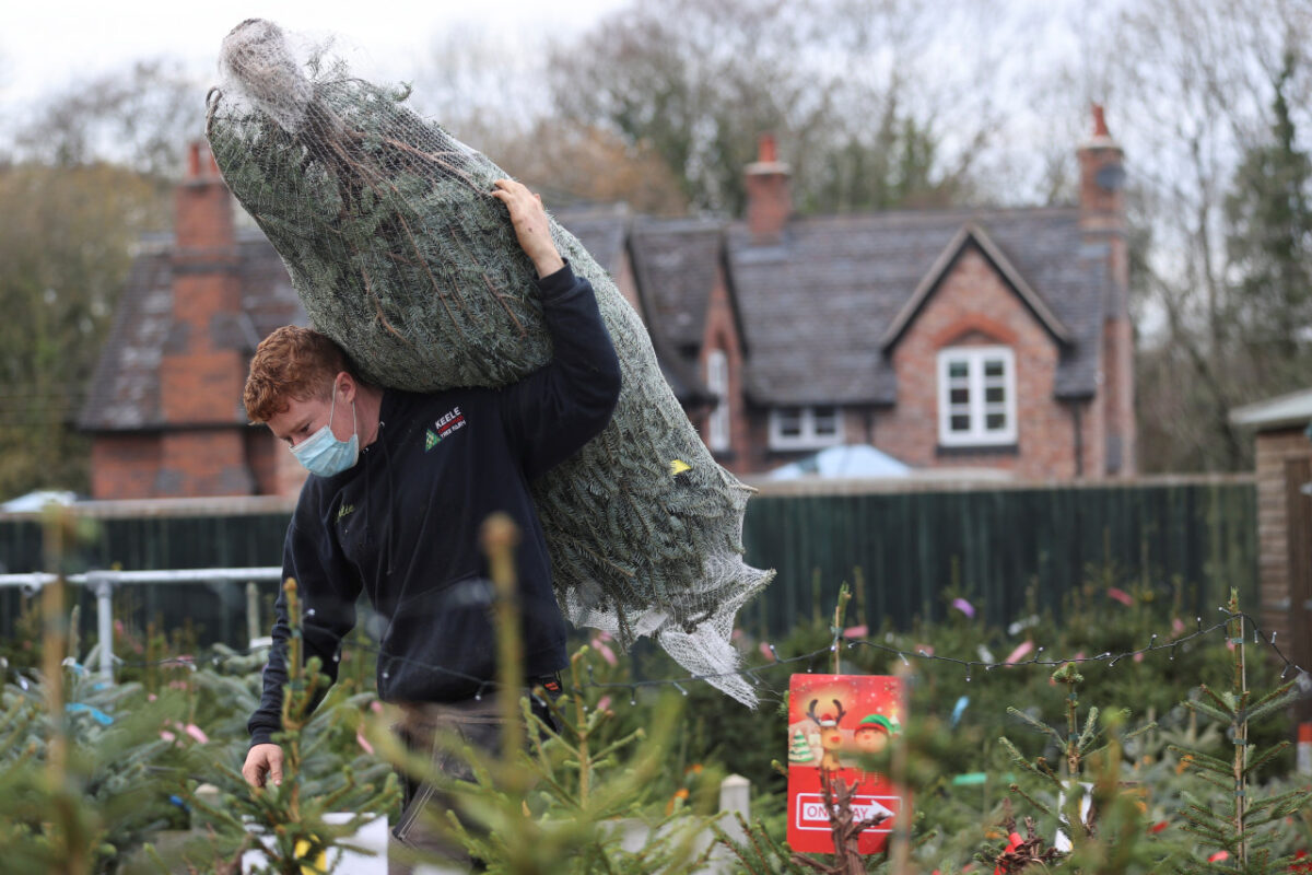 A worker carries a tree at a Christmas Tree Farm