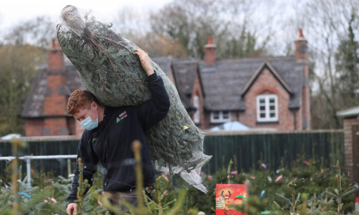 A worker carries a tree at a Christmas Tree Farm, amidst the outbreak of the CCP virus, in Keele, Staffordshire, on Nov. 24, 2020. (Carl Recine/Reuters)