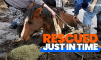 Amazing Rescue of Little Filly