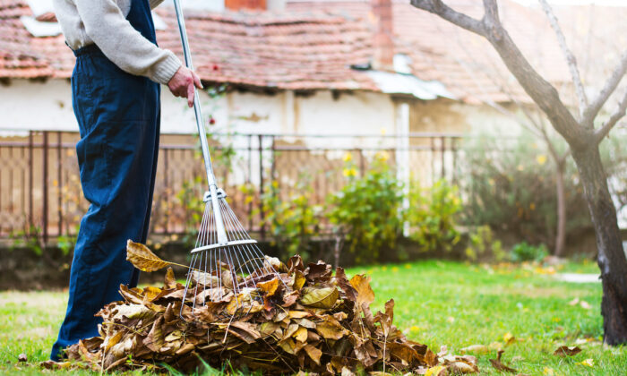 Each tool has its strengths and weaknesses. Rakes are easy to use, don't pollute the air, and don't make too much noise. (Creative Family/Shutterstock)