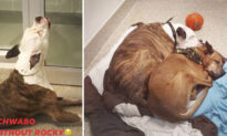 Video of Surrendered Dog 'Crying' After Being Separated From His Best Friend Goes Viral