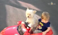 Dog Gives Toddler a Ride in Toy Convertible