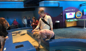 Ripley's Aquarium of the Smokies Offers a Day Filled With Fun