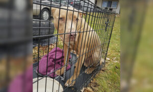 Abandoned Dog in Crate With Bag of Food Found on a Road, Michigan Woman Says, Finds New Home