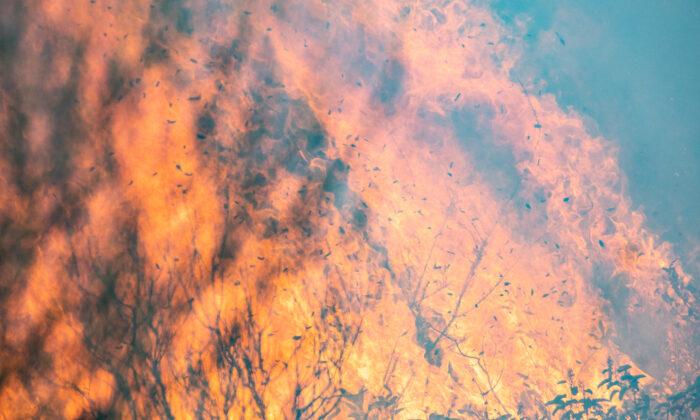 The Bond Fire burns in Silverado Canyon, Calif., on Dec. 3, 2020. (John Fredricks/The Epoch Times)