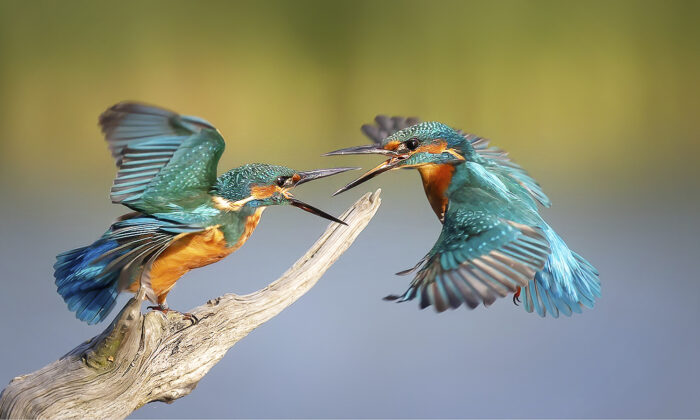 (Courtesy of Michael J Vickers via Sussex Wildlife Trust)