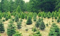 As 2020 Kills Traditions, Christmas Stands Strong