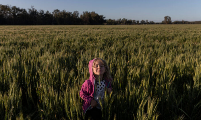 Bonnie Taylor plays amongst the wheat fields on the family farm  outside Coonabarabran on October 01, 2020 in Coonabarabran, Australia. (Brook Mitchell/Getty Images)
