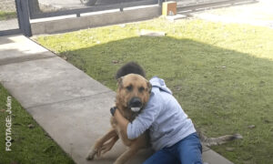 Animal Reunited With Owners