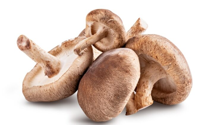 Gardeners may enjoy growing mushrooms at home, indoor, or outdoor. (Anastasiia Skorobogatova/Shutterstock)