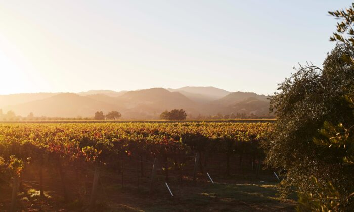 Blackbird Vineyards in Napa Valley. (Courtesy of Blackbird Vineyards)