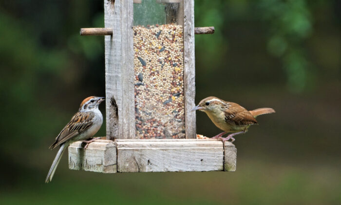 Most gardeners are also interested in the birds that come to their property, making a bird feeder a great gift. (Ancha Chiangmai/Shutterstock)