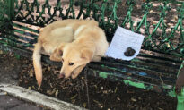 Abused, Mistreated Dog Left on Bench With Heartbreaking Note: 'Please Adopt Me'