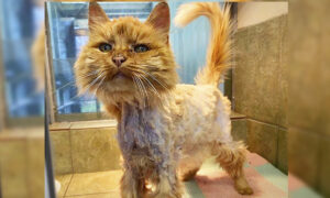 Emaciated Cat Thrown Into a River Was Drowning–Until Anonymous Dog Walker Rescued Her