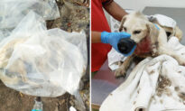 Driver Sees Critically Injured Dog Dumped in Plastic Bag by 3 Men, Calls Rescuers