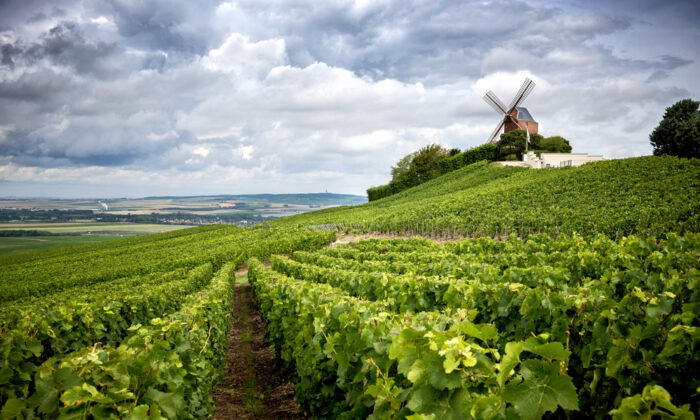 Only bubbly produced within the carefully drawn boundaries of the Champagne district in northeastern France can legally be sold as Champagne. (Massimo Santi/Shutterstock)