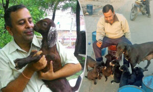 Man Dedicates His Life to Help Animals in Need, Has Rescued Over 900 of Them