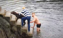 Rugby Player Plunges Into Freezing Water to Rescue Lab Caught in Mooring Lines in Ireland