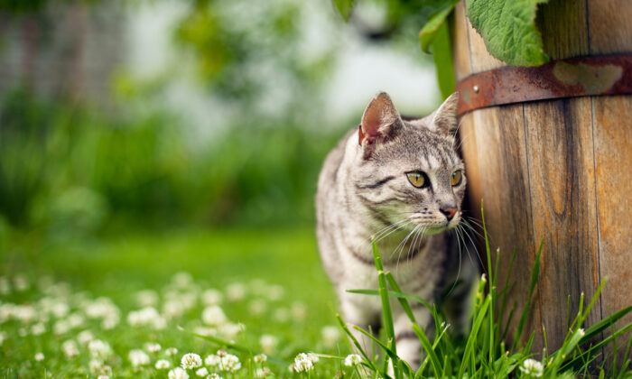 To deter cats from using your yard as a litter box, you can use coffee grounds. (Aleksandra Madejska/Shutterstock)