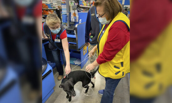Reunion at Walmart: Dog Lost for 3 Weeks Wanders Into Store to Find Owner at Work