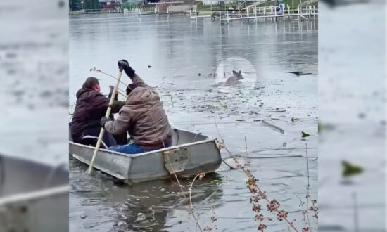 A Group of Good Samaritans Rescue a Struggling Deer From an Icy Lake in a Rowboat
