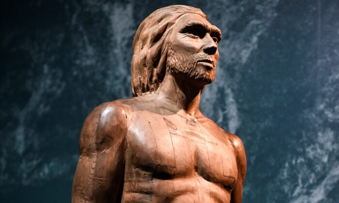 A reconstruction of the Man of Spy displayed for the Neanderthal exhibition at the Musee de l'Homme in Paris on March 26, 2018.  (Stephane de Sakutin/AFP via Getty Images)