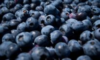 BC Helps Fund Blueberry Farmers Against US Trade Commission Investigation