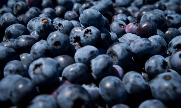 Freshly picked blueberries are see at Emma Lea Farms in Ladner, B.C., on July 21, 2014. (The Canadian Press/Darryl Dyck)