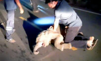 Rescuer Revives Baby Elephant Struck by Motorcycle Using CPR, and the Video Is Amazing