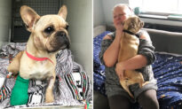 Stolen Dog With Injured Leg 'Dumped Like Rubbish,' Reunites With Family After 8 Months