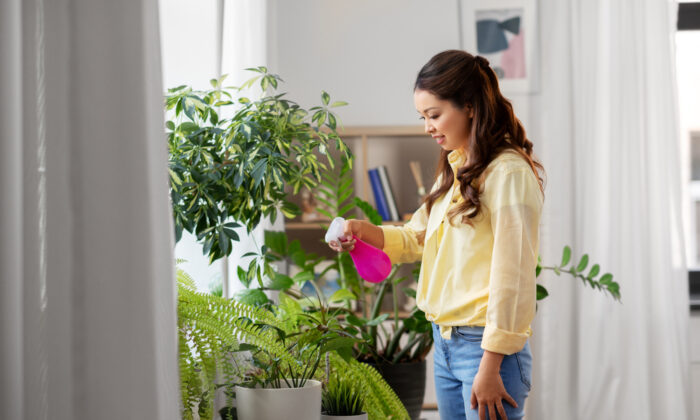 Give your indoor plants a winter grooming; rotate them and clean up dead leaves. (Syda Productions/Shutterstock)