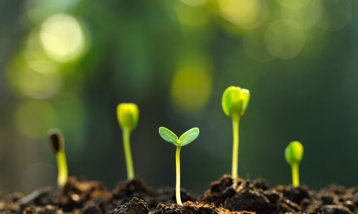 To determine how well your seeds are going to grow this summer, you can do a test. (amenic181/Shutterstock)