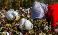 US Bans All Cotton, Tomato Products From Xinjiang in Crackdown on Forced Labor