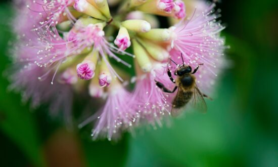 Pesticides May Be Slowly Killing Bees, Study Says