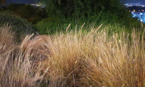 Can You Spot the Perfectly Camouflaged Chameleons in This 'Normal' Field of Grass?