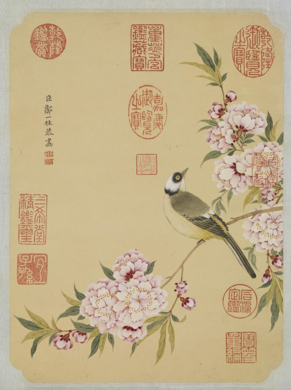 bird and peach blossoms in spring