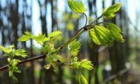 Nature Has Healing Properties for Australia's Bushfire Stricken Forests