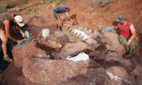 Paleontologists Unearth Giant Dinosaur Fossils That Could Belong to Largest Land Creature Ever Known