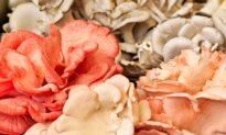 The Dark Arts of Winter Mushroom Gardens