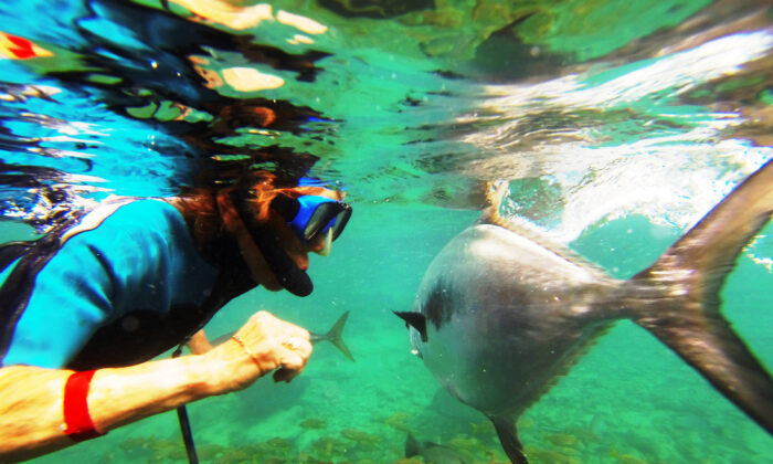 A visitor swims with fish at the Dolphin Academy of Curaçao Sea Aquarium. (Courtesy of Victor Block)