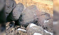 Can You Spot the Mountain Lion 'Hidden in Plain Sight' in This Photo of a Few Boulders?