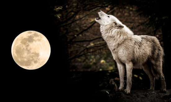 The Full 'Wolf Moon' to Grace the Night Sky on January 28; Here's What You Need to Know