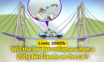 Would a 20-Mile Bridge With 2,000lb Limit Collapse if a Bird Landed on a 2,000lb Car Halfway Across?