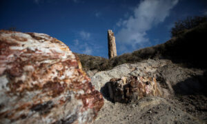 Scientists in Greece Find 20 Million Year-Old Petrified Tree